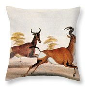 Sassaby And Hartebeest, Throw Pillow