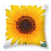 Sassy Sunflower Throw Pillow