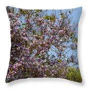 Saucer Magnolia Or Tulip Tree Magnolia X Soulangeana Throw Pillow