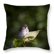 Savannah Sparrow With Spiders Throw Pillow