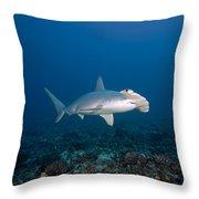 Scalloped Hammerhead Shark Throw Pillow