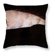 Scalloped Ribbonfish Throw Pillow