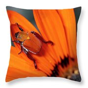 Scarab Beetle On A Guzmania Flower Throw Pillow