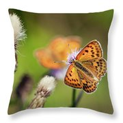 Scarce Copper Butterfly Throw Pillow