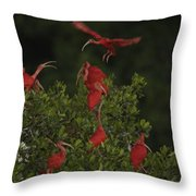 Scarlet Ibises Roost In A Red Mangrove Throw Pillow