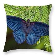 Scarlet Swallowtail Throw Pillow by Joann Vitali