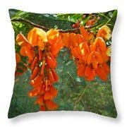 Scarlet Wisteria Tree - Sesbania Punicea Throw Pillow