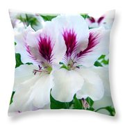 Scented Geraniums 2 Throw Pillow