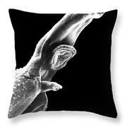 Schistosome Throw Pillow