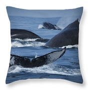 School Of Humpback Whales Throw Pillow