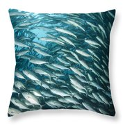 School Of Jacks, Indonesia Throw Pillow
