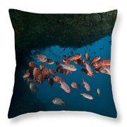 School Of Red Bigeye Under A Rocky Throw Pillow by Mathieu Meur