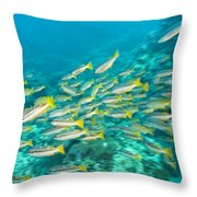 Schooling Bigeye Snappers Throw Pillow
