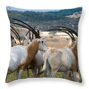 Scimitar-horned Oryx Throw Pillow