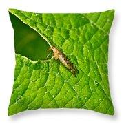 Scorpion Fly Nosing Around Throw Pillow