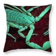 Scorpion Glows In Uv Light Costa Rica Throw Pillow