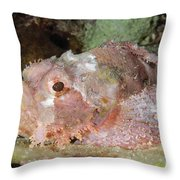 Scorpionfish, Indonesia Throw Pillow