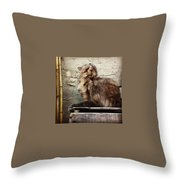 Scritch Scratch Throw Pillow by Katie Cupcakes