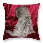 Scruffy Fold 2011 1 Throw Pillow