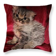 Scruffy Fold 2011 3 Throw Pillow
