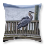 Scruffy Heron Throw Pillow
