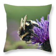 Scrufy Old Bee Throw Pillow