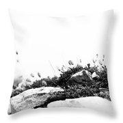 Sea Campion Wall Throw Pillow