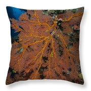 Sea Fan, Fiji Throw Pillow