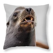Sea Lion And Yellow Fangs Throw Pillow