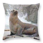 Sea Lion Monterey Throw Pillow