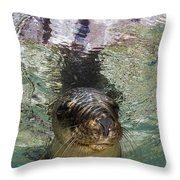 Sea Lion Portrait, Los Islotes, La Paz Throw Pillow by Todd Winner