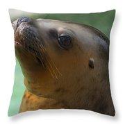 Sea Lion Up Close. Throw Pillow