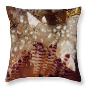 Sea Snails Laying Eggs On Top Of A Fire Throw Pillow