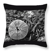 Sea Urchin On Seaweed Throw Pillow by David Rucker