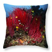 Sea Whips And Soft Coral, Fiji Throw Pillow
