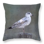 Seagull Throw Pillow by Betty LaRue