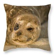 Seal 1 Throw Pillow