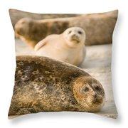 Seal 3 Throw Pillow