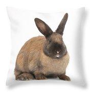 Seal-point Rabbit Throw Pillow