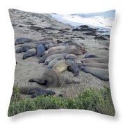 Seal Spa. Sand Bath Throw Pillow