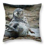 Seal Stretch Throw Pillow