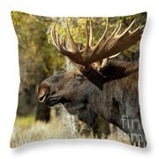 Searching For The Competition Throw Pillow