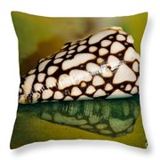 Seashell Wall Art 4 - Conus Marmoreus Throw Pillow