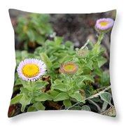 Seaside Fleabane Flowers Throw Pillow