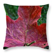 Seasonal Changes Throw Pillow