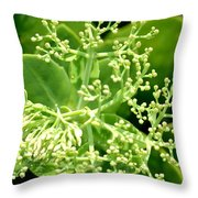 Sedum Droplets Throw Pillow