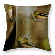 Seed Eating Song Birds Throw Pillow
