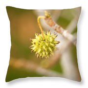 Seed Pod On Sycamore Tree Throw Pillow