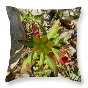Seedbox And Shadow Throw Pillow