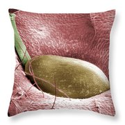 Sem Of A Strawberry Seed Throw Pillow